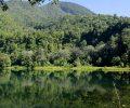 Mengenal Hutan TWA Ruteng, Rumah Besar Biodiversitas Endemik Flores