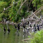 Burung - Burung di Danau Asmara