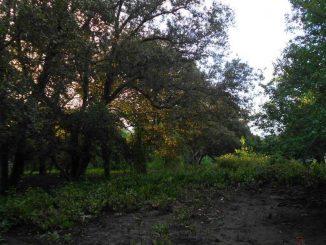 Kondisi Mangrove di Muara Wae Bobo - We Reca, Borong