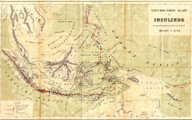 Jejak Wallace di Flores; Catatan Yang Terlupakan (Bagian 1)