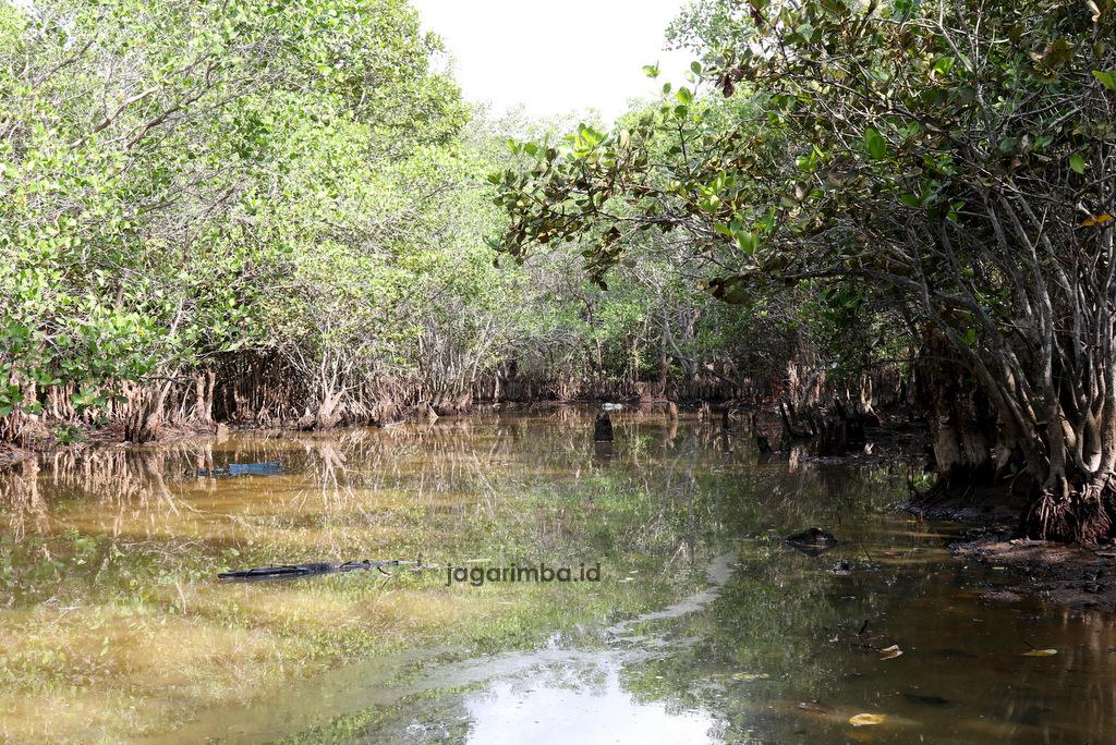 Mangrove Borong
