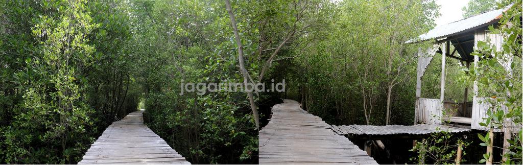 Jembatan Bambu di Mangrove Magepanda