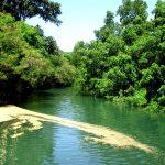 Mangrove Yang Tersisa di Kampung Waso