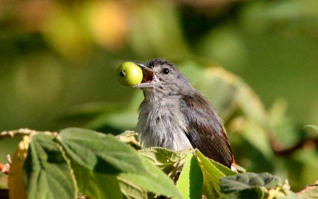 Ayo Jadikan Rumah Kita 'Rumah Ramah Burung'