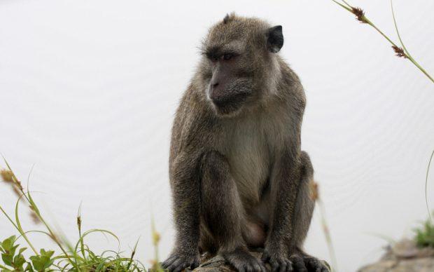 Ide Buruk Memberi Makan Monyet Di Ranamese
