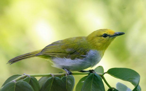 Burung – Burung Di Flores Yang Masuk Kategori Dilindungi