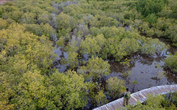 Memori Tsunami Maumere; Alm. Baba Akong dan Mangrove Yang Menjaga Magepanda