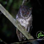 Burung – Burung Malam