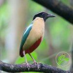 Burung di Ranamese