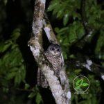 Hutan Billa – Sumba